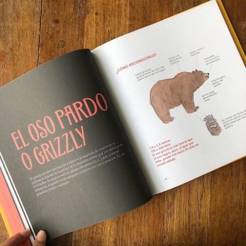 osos pardo blanco negro libro pipala