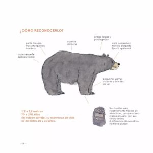 libro osos